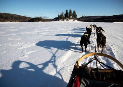 chien de traineau Mont-Tremblant - activités | D-Tour