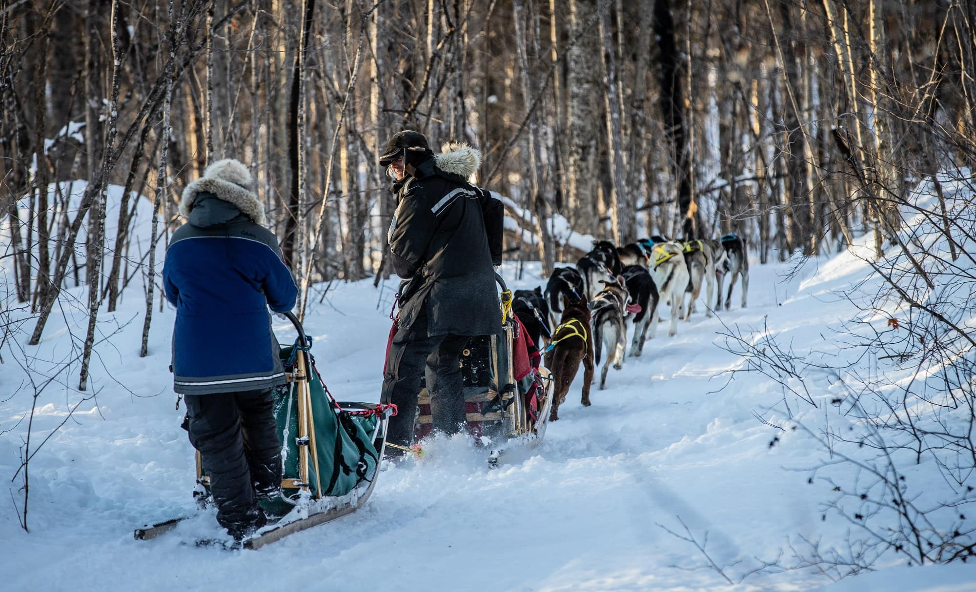 dog sledding Mont-Tremblant - activity | D-Tour